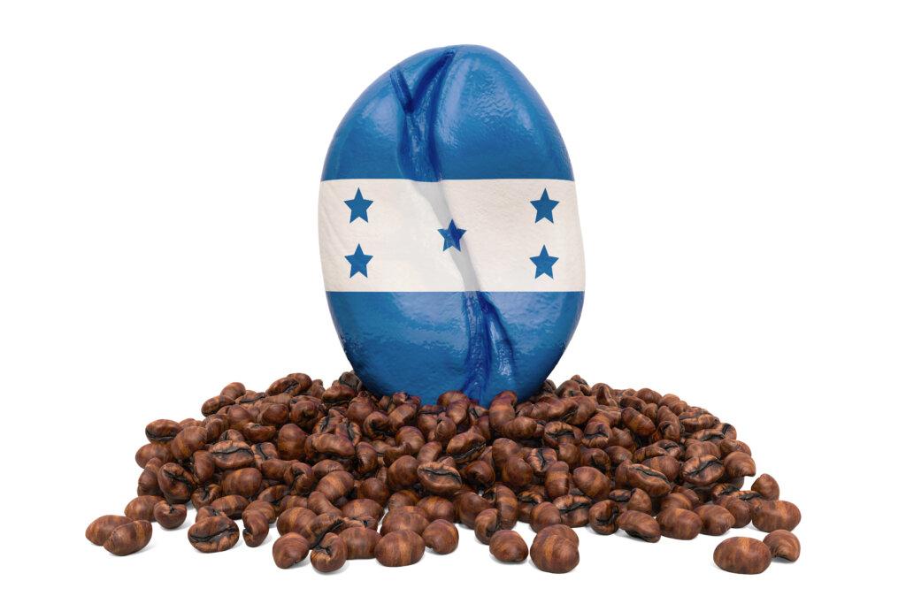 Zrno Honduras